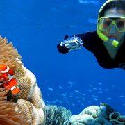 Agincourt-Nemo-clownfish-female-diver