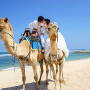 camel-nikko