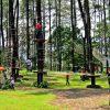 treetop (6)