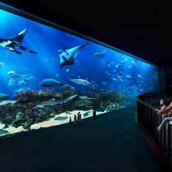 S.E.A Aquarium (2)