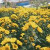 Menikmati-Pesona-Keindahan-Wisata-Alam-Setiya-Aji-Flower-Farm-Semarang-artikel