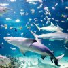 SEA LIFE Sydney Aquarium (1)