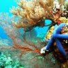 Terumbu-Karang-California-Reef